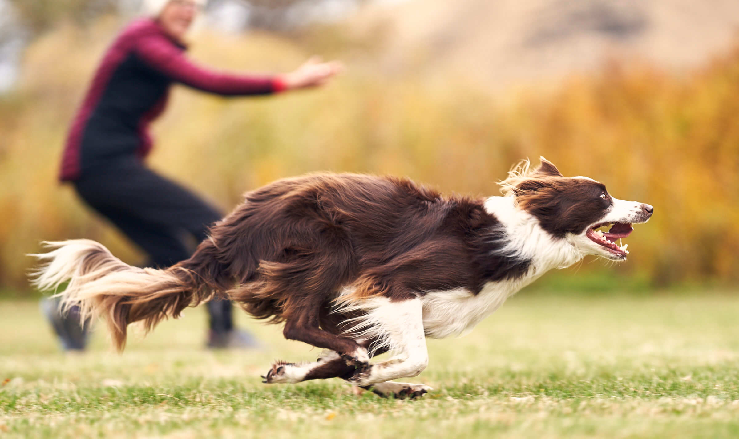 Border Collie agility dog sports photography in Spokane, Washington
